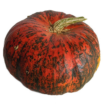 Red Flat Pumpkin