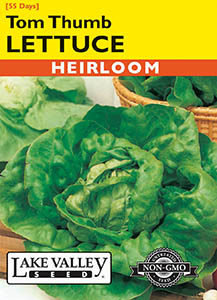 LETTUCE TOM THUMB  HEIRLOOM