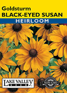 BLACK EYED SUSAN GOLDSTURM  HEIRLOOM