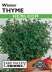 THYME WINTER HEIRLOOM