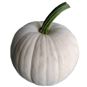 White Snowball Pumpkin