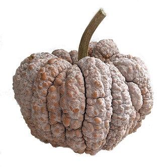 Pink Warty Squash Pumpkin