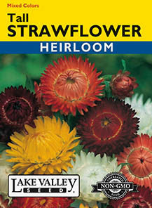 STRAWFLOWER TALL MIXED COLORS  HEIRLOOM