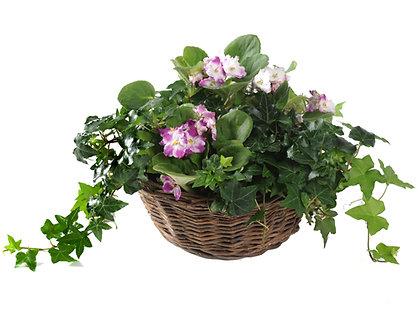 African Violet Garden w/Ivy