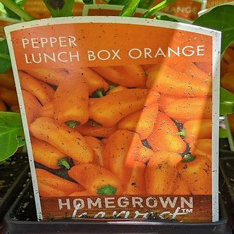 "Pepper 'Lunch Box Orange' 3.5"" Pot"