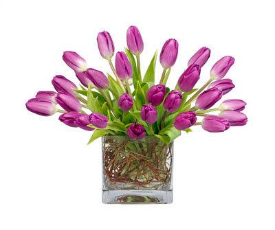 Purple Tulip Square