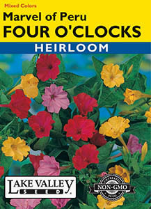FOUR O'CLOCKS MARVEL OF PERU MIXED COLORS  HEIRLOO