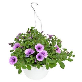 "Hanging Basket 10"" Purple Veined Petunias"