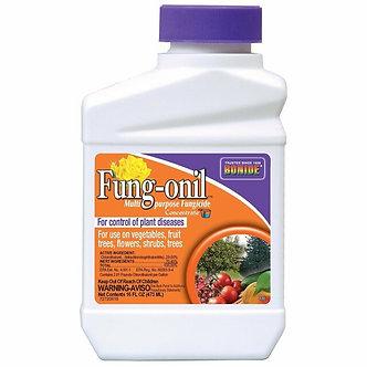 Bonide BND880 Bonide Pt Liquid Fungonil with Daconil Fungicide