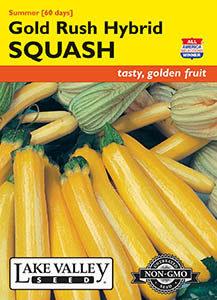 SQUASH SUMMER GOLD RUSH HYBRID