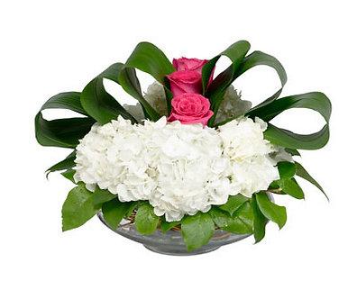 Shallow White Hydrangea