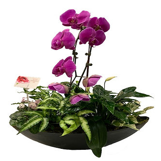 Large Oval Mixed Dish Garden