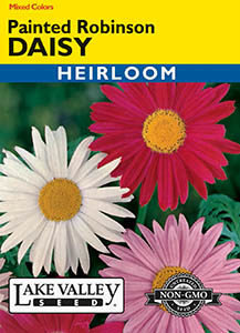 DAISY PAINTED ROBINSON MIXED COLORS  HEIRLOOM