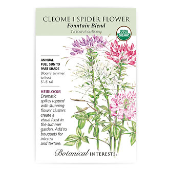 Cleome Fountain Blend Org