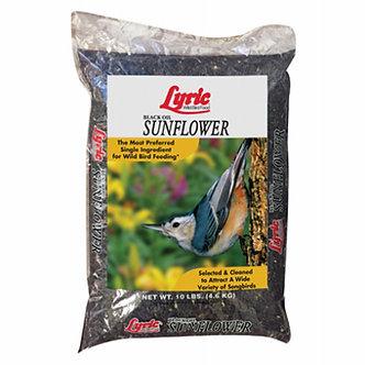 Lyric Black Oil Sunflower Bird Food 5 lbs