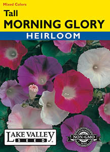 MORNING GLORY TALL MIXED COLORS