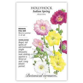 Hollyhock Indian Spring