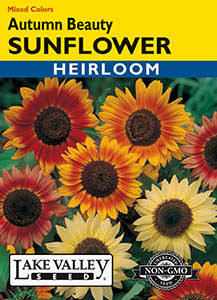 SUNFLOWER AUTUMN BEAUTY MIXED COLORS HEIRLOOM