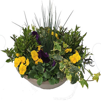 "Pansy Mixed Container Short 14"" Bowl"