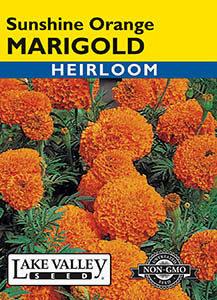 MARIGOLD SUNSHINE ORANGE  HEIRLOOM