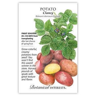 Potato Clancy hybrid
