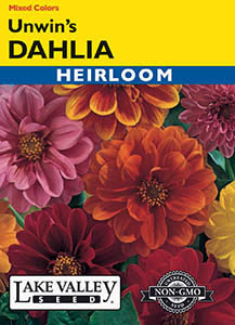 DAHLIA UNWIN'S MIXED COLORS  HEIRLOOM