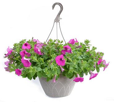 Wave Petunia Hanging Basket