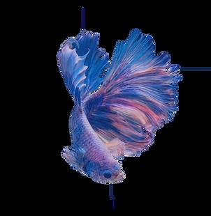 original%20fish%20reverse%20transparent_