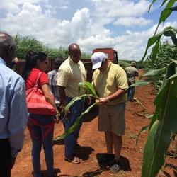 John checking Cuban corn with grower