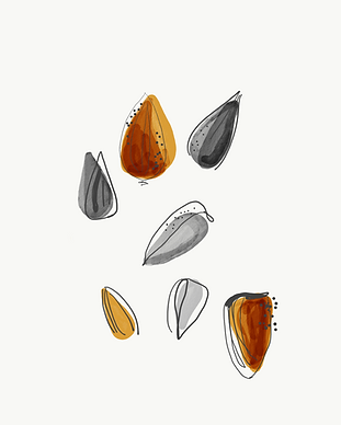 seeds no background.png
