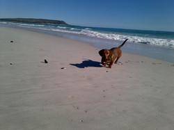Gherkin at Muiz/Capricorn Beach