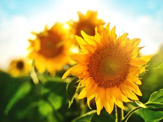 Jeder kennt die Stars der Anti-Aging-Inhaltsstoffe wie Retinol, Vitamin C.......