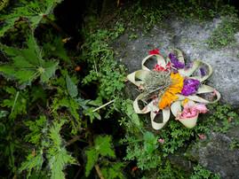 ahelia-Bali9.jpg