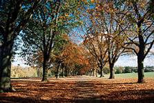 220px-Abington-Park.jpg