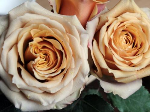Rose GoldenMustard