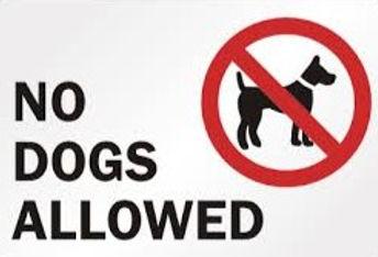 no dogs allowed_edited.jpg