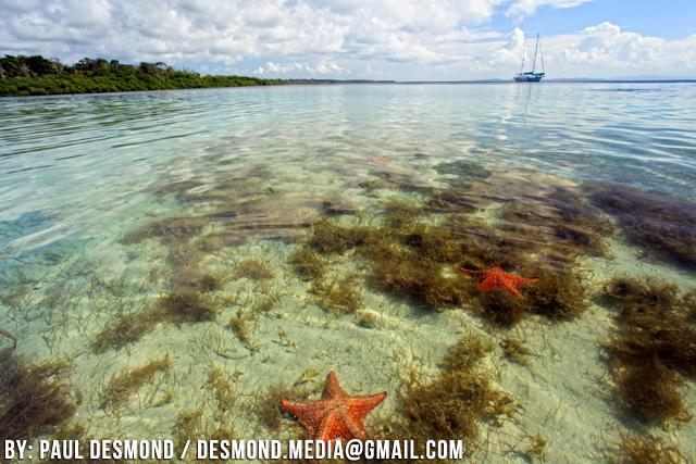 starfish-beach-isla-colon-bocas-del-toro