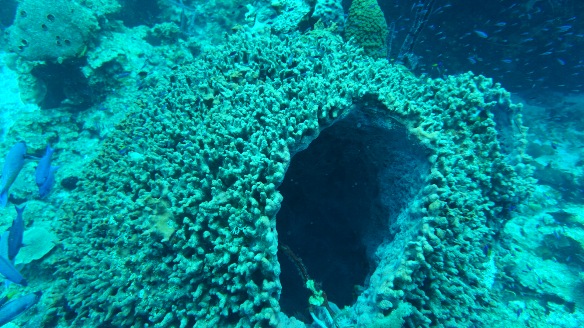 long-cay-belize-coral-