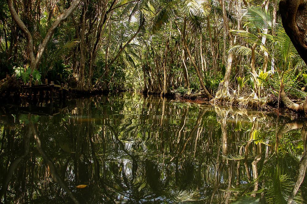 Indian River, onde foi filmado cenas do Piratas do Caribe