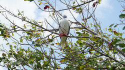 Half-moon-cay-belize-red-footed-