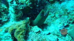 long-cay-belize-eel