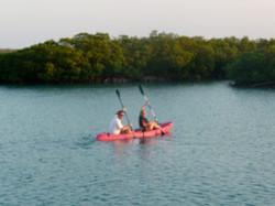 BluelfieldMangrove-Trees-Belize