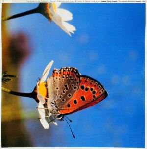 סט תמונות פרפרים צבעוניים
