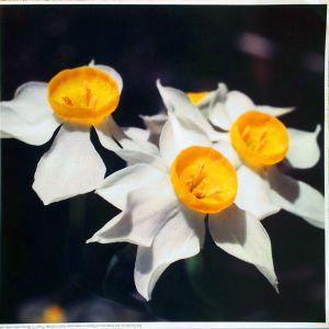 סט תמונות פרחים צבעוניים
