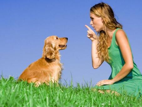 OK al sequestro preventivo dei cani che disturbano il vicinato se il padrone non ha cura di loro