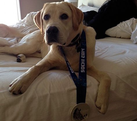 Here's Harvey (9 months old) wearing his Silver Medal from the Sochi Olympics 2014.  His dad, Trip, and owners, Gus & Danielle, are very proud of him!