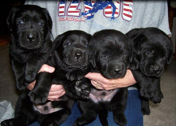 Blackpuppies.jpg