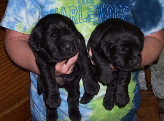 Abby & Kasey (1).JPG