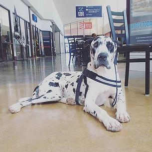 Such a good boy!  #pacificbluestraining