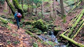 Enjoy trekking in rich nature|Trekking in the Chestnut(TOCHI-NO-KI) Forest area
